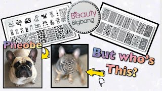 BeautyBigbang NEW Stamping Plates  Dog/Cat & Geometry | Meet My French Bulldogs