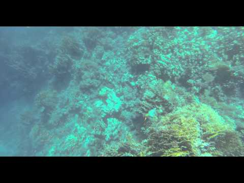 Red Sea Coral - Rotes Meer Korallen - CC BY-NC-SA Royalty Free