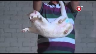 Падения кошки на четыре лапы