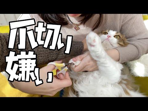 爪切り嫌いのもふ猫さん、今回は大人しくして頂きます!