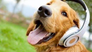 Kukkapillanamma Nenu Kukkapillanani song ---Aadapillanamma song Spoof---Must watch