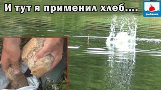 Применяю хлеб в прикормке на крупного карася! Рыбалка на удочки с поплавком!