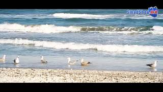 видео Отдых на Черноморском побережье Румынии с детьми отели