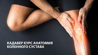 Кадавер курс Анатомия, биомеханика и тестирование коленного сустава | 18+