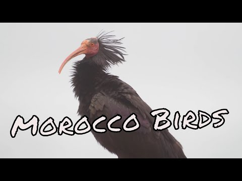 Morocco Wildlife and landscapes