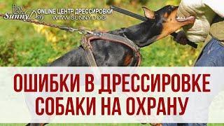 Ошибки владельцев в дрессировке собаки для охраны. Как научить собаку защите?