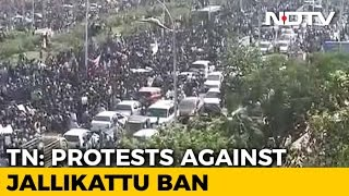 Thousands Protest At Chennai's Marina Beach In Support Of Jallikattu