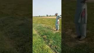 Quail Hunting with Net  #shorts