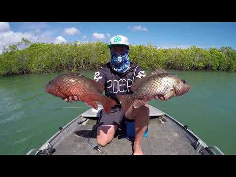 Catching Mangrove Jack in Paradise