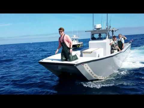 2/19/17 VENICE LA FISHING VIDEO