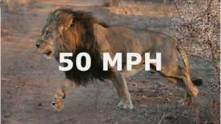 Top 20 Fastest Land Animals