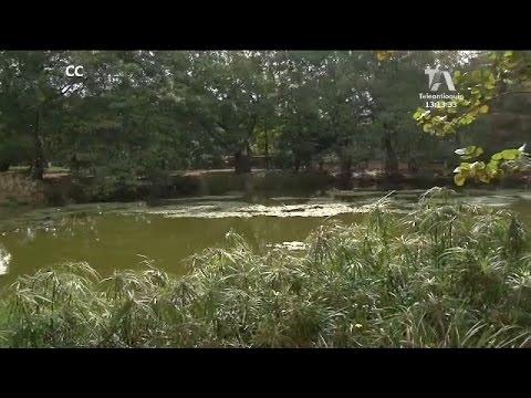 El jard n bot nico de medell n cumple 45 a os youtube for Bodas en el jardin botanico medellin