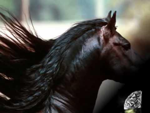 Обои лошади.avi