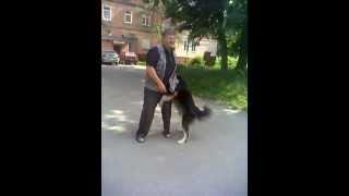 Собака и мужик