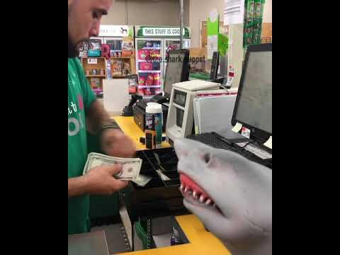 shark puppet buys sharks