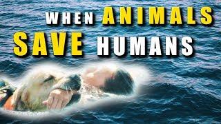 ANIMALS Saving HUMANS - FACT or FICTION?
