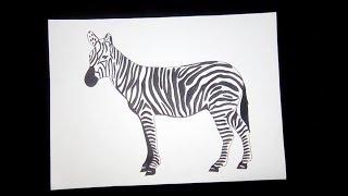 zebra easy draw step