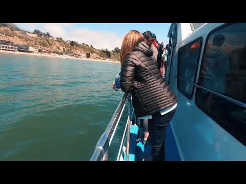 Great White Shark Sightings From Boat- Monterey Bay, CA