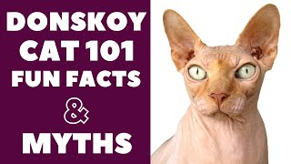 Donskoy Cats 101 : Fun Facts & Myths