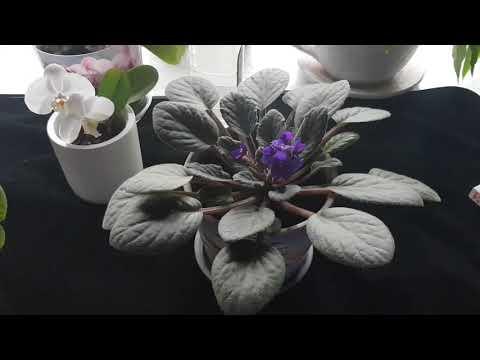 Янтарная кислота для цветов!!! Все ответы тут