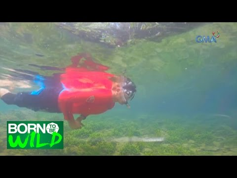 Born to Be Wild: Bugang River, one of the cleanest rivers in the Philippines