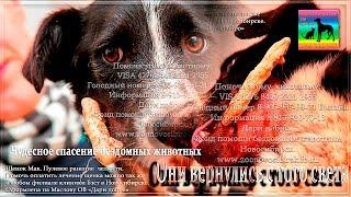 До слез Жестокая правда приютов для животных ❤ animals in the shelter needs your help