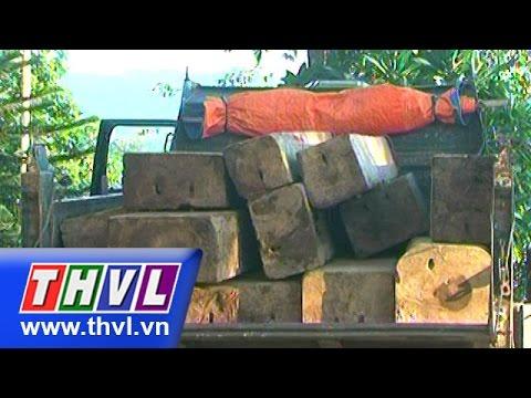 THVL | Bắt giữ vụ khai thác gỗ lậu tại Quảng Trị