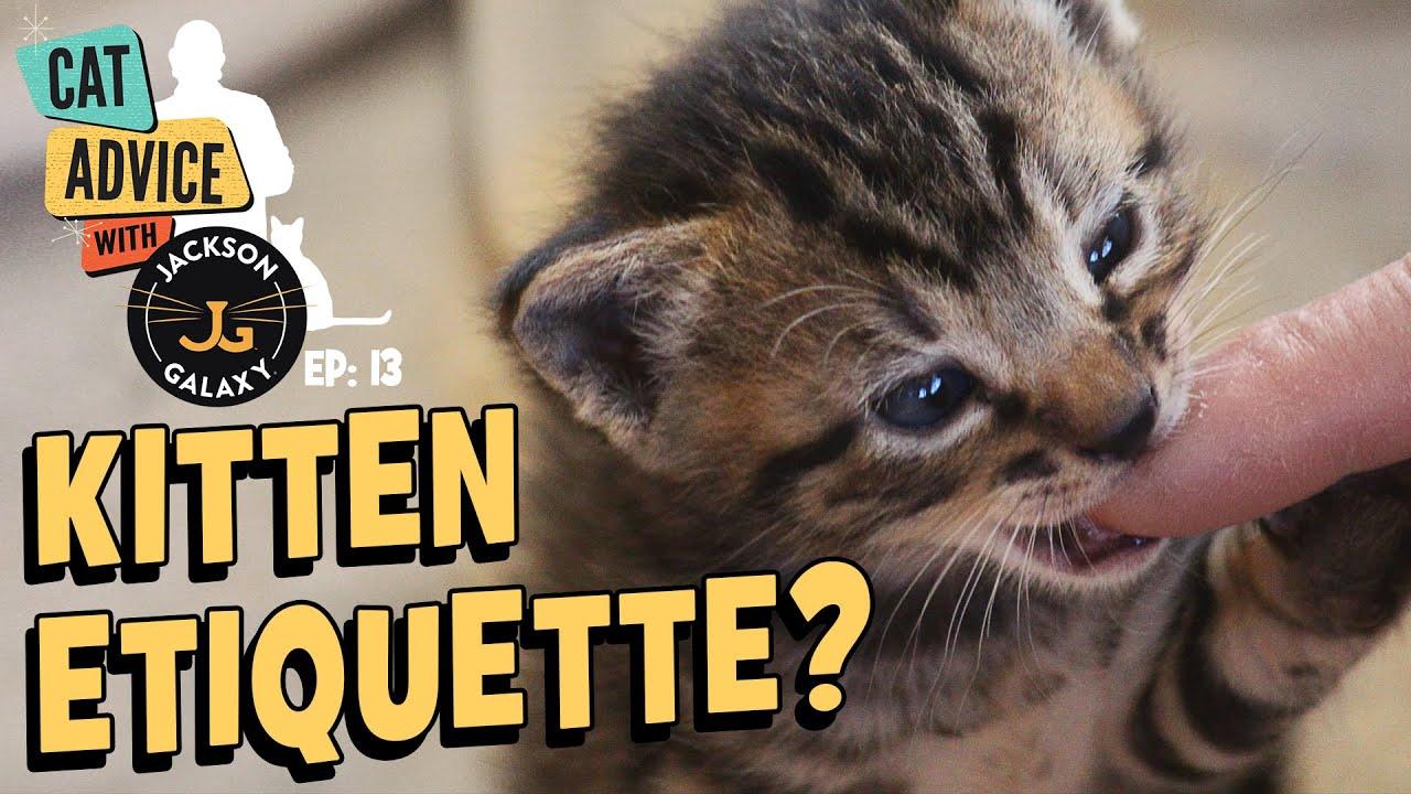 Stop Kitten Biting NOW!