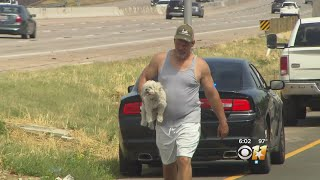 Dog Inside Stolen Truck Reunited With Owner After Chase