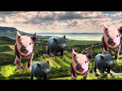 Micro-pigs and the Pros and Cons of GMO Pets