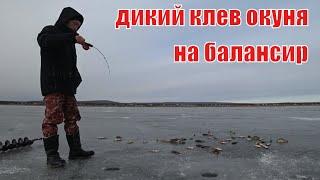 Ловля окуня в ноябре на балансир. Зимняя рыбалка 2019 - 2020