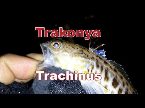 trakonya