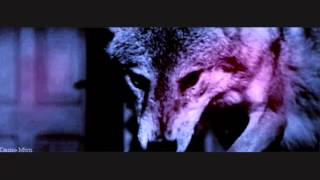 Awesome Wolf Gif Video Mp3