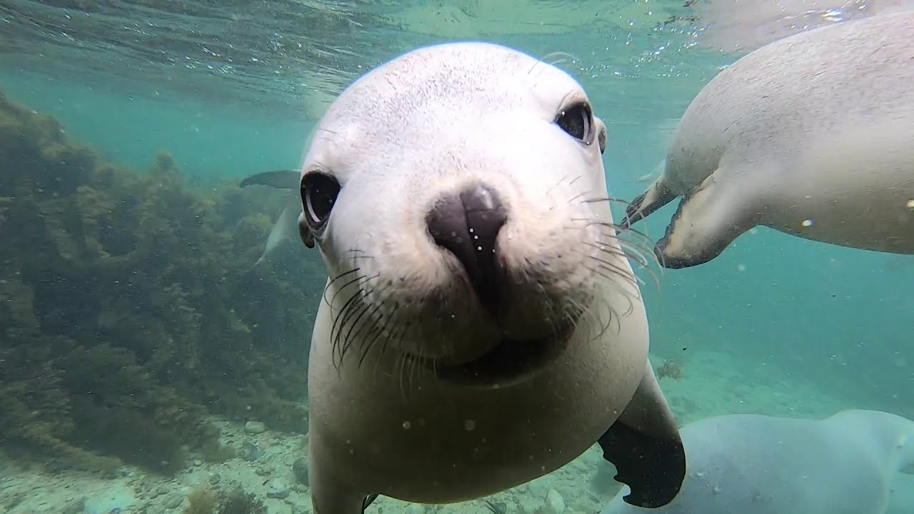 Swim with the Sealions - 21st February 2021