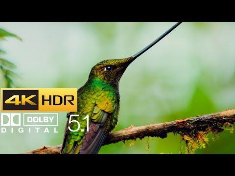 Planet Earth II - Hummingbirds (HDR - 4K - 5.1)