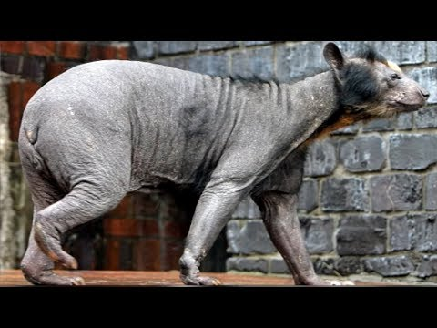 5 Most Mysterious Creatures Caught In Germany!
