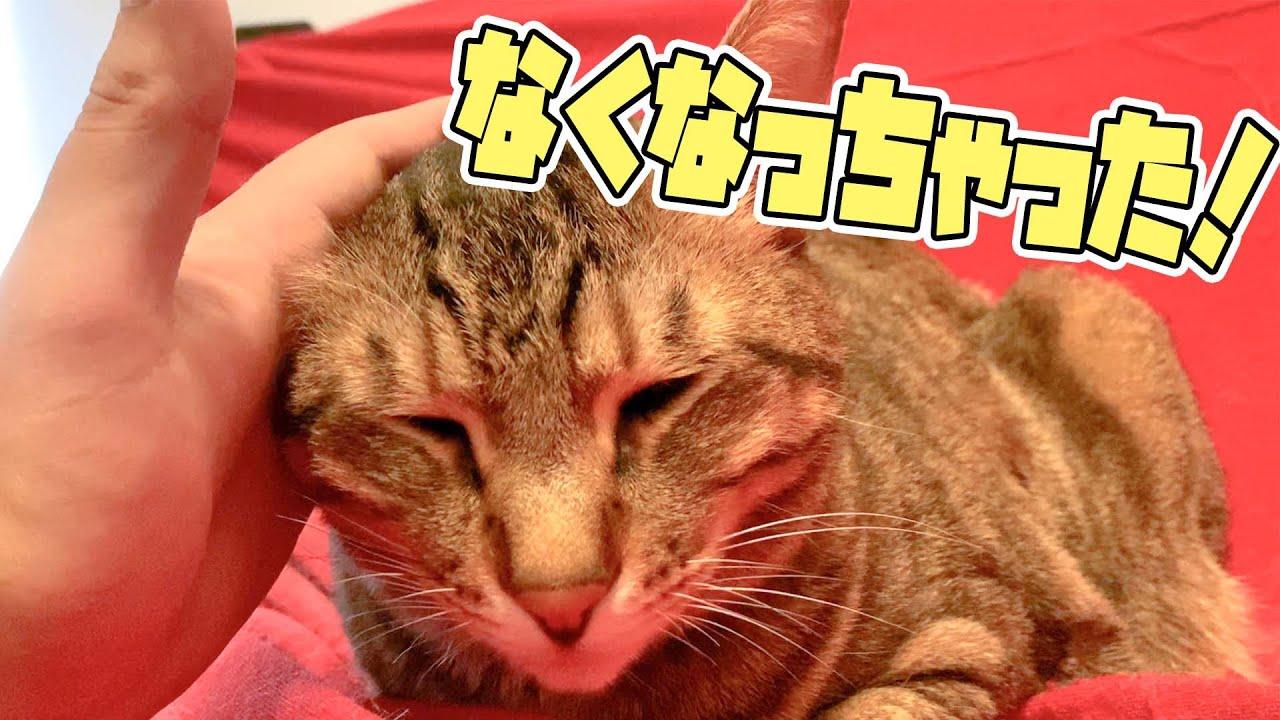 【事件】猫の耳が一つ失くなりました