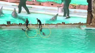 Ancol Gelanggang Samudera - Dolphin Show lumba Lumba 2 HD