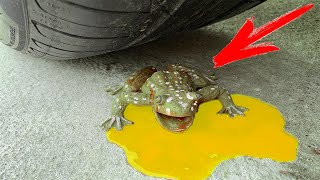 Crushing Crunchy & Soft Things by Car! EXPERIMENT CAR vs FROG (Toy)