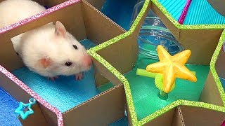 Funny Little Hamster in Star Maze