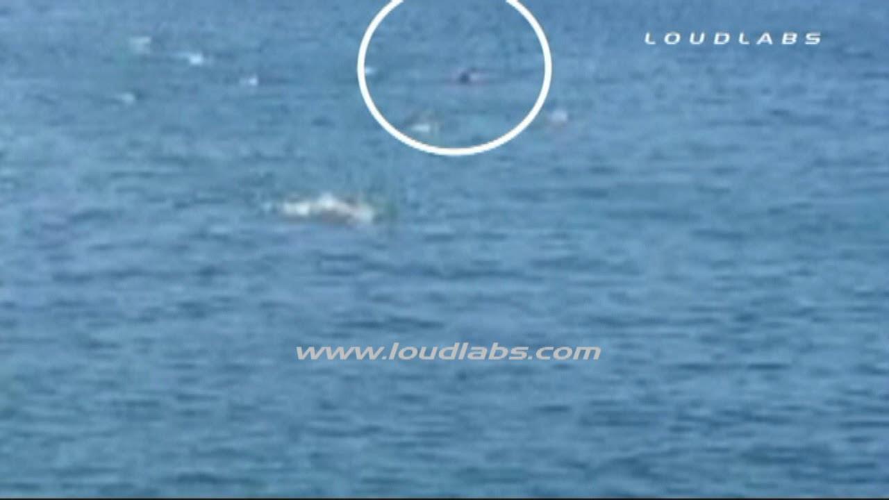 Shark Attack Caught On Tape In Manhattan Beach | HuffPost