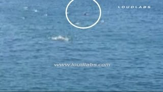 "Great White Shark Attack ""CAUGHT on CAMERA"" / Manhattan Beach Pier   RAW FOOTAGE"