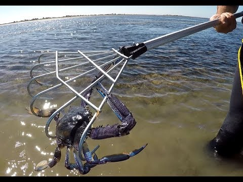 Parham, SA Nov.27/16 Blue Swimmer Crabbing