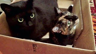 Cats & Boxes - A Love Story