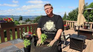 Hemp Huntress - Growing Hemp in your garden (long version)