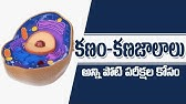 The Cells and its function (Telugu) | My MOM | natty - YouTube