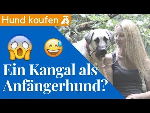 Ein Kangal als Anfängerhund? / Mia and Me DogTV