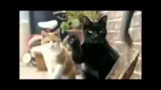 коты-озвучка