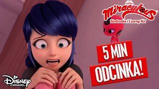 Miraculous: Biedronka i Czarny Kot  | Pierwsze 5 minut odcinka!