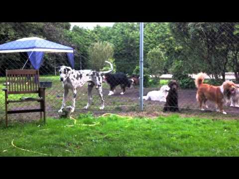 vip dog park honden hotel 14